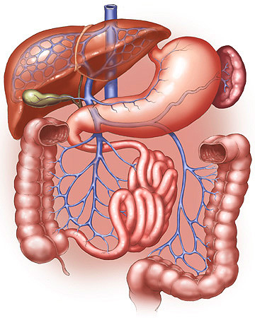 digestive system sketch drawing picture illustration